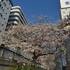 Blossom time, Otsuka