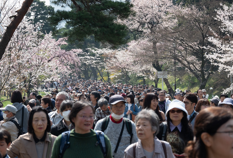 Imperial Palace Cherry Blossom Walk, Tokyo
