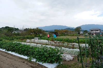 Picking fresh vegetables at an organic farm - Asuka Village, Japan.