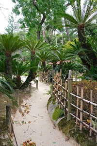 Bamboo fencing and tall Sago Palms.