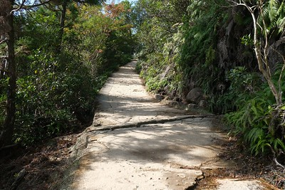 Nicely shaded trail.