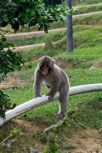 Visiting with Japanese macaque monkey's at the Arashiyama Iwatayama Monkey Park - Arashiyama, Kyoto, Japan.