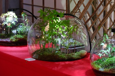 Terrarium plantings depicting the Temple grounds.