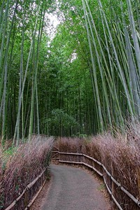 The Arashiyama Bamboo Grove. Walking the side streets of Arashiyama.