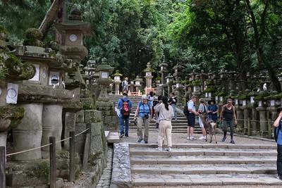 Walking around the Kasuga Tashia Shrine grounds - Nara, Japan.