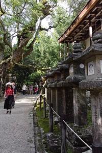 Many stone lanterns line the pathways.