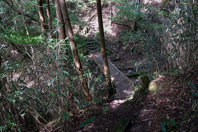 Along the Johyama Forest walkway.
