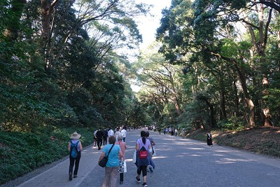 It's about a 10 minute walk along forested pathways to reach the main temple.