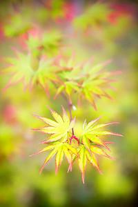 Spring leaves at Ritsurin Gardens, Takamatsu, Japan