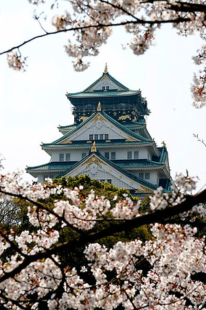 Cherry Blossoms and Osaka Castle.