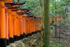 Tunnel of red torii gates at the Fushimi Inari Shrine