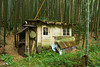 A bamboo cutter's house