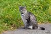 A cat near the Uzu volcano