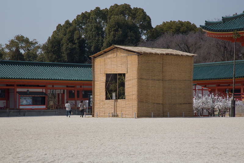 Orange trees covered up for winter at Heian Shrine