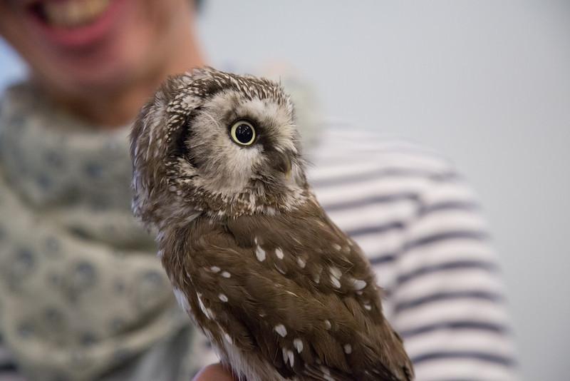 Owl Cafe in Osaka