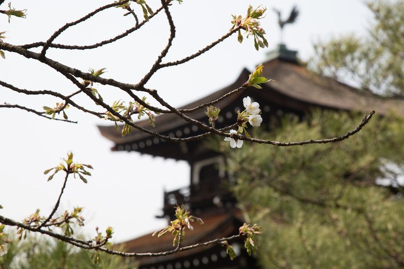Early spring at Heian Shrine