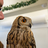 Owl Cafe in Osaka