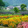 Village flower garden