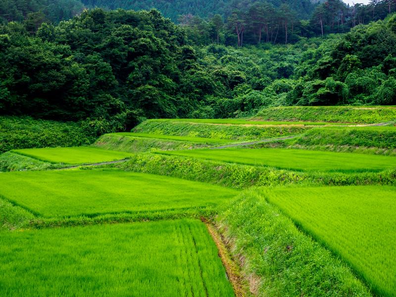 Rice paddies in Nagano