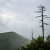 Trees as victims to high winds and winter cold in Jigokudani Hells Valley, Nagano
