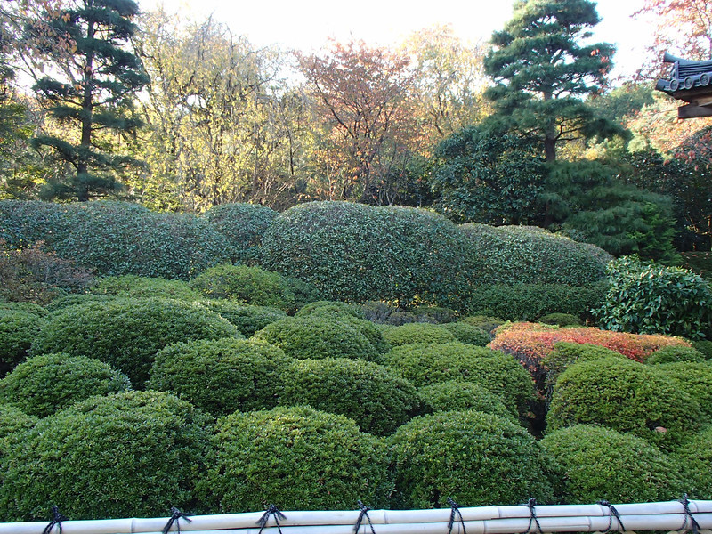 Hedge garden. Looking awesome of course.