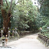 Pathway with Shinto-decorated tree