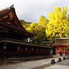 Shrine courtyard with brilliant ginkos!