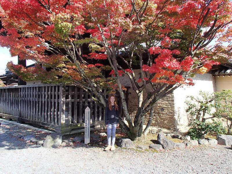 The weather clears up for our first temple, Tenryu-ji. This was Monday and we were bashing around the west and northwest part of town. Look at these maples...and more is in store.