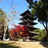 The pagoda and its friend the crimson maple...
