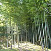 This district, Arashiyama, is also known for its towering bamboo groves.
