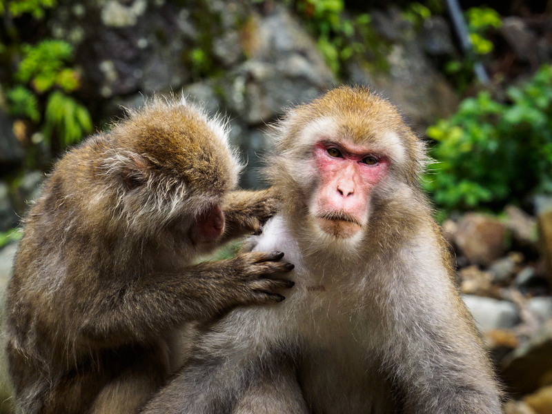 Grooming each other for hygiene and social mingling