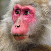 Macaques can live up to 25-30 years.