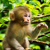 This little one is one of  about 180 snow monkeys in Jigokudan..