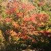 2008 11 03 Miyajima 115