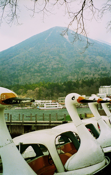 Goose paddle boats, naturally, near to Mt. Fuji