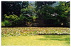 Aizu Wakamatsu (会津若松) - Oyaku-en Garden (御薬園) - Shinji no Ike Pond (心字の池)