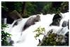 Oirase Keiryū (奥入瀬渓流) - Heisei-no-nagare Rapids (平成の流れ)