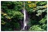Oirase Keiryū (奥入瀬渓流) - Shiranuno-no-Taki Fall (白布の滝)