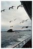 Matsushima (松島) - Nabejima Island (鍋島)