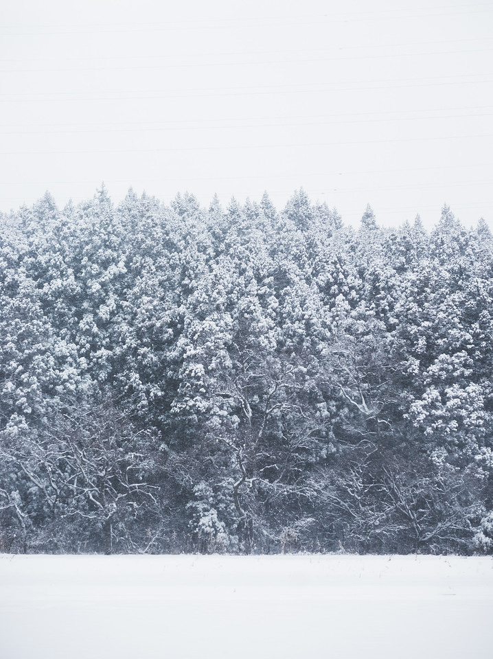 Snow Covered Trees In Akita