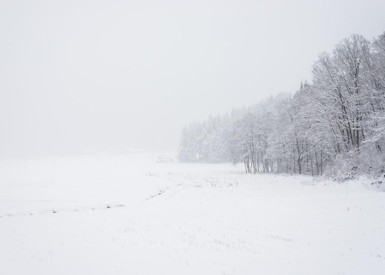 Trees In Snow In Akita Prefecture