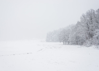 Trees In Snow In Akita Prefecture