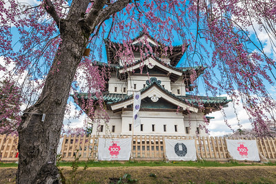 Hirosaki Castle Under Pink Cherry Blossoms