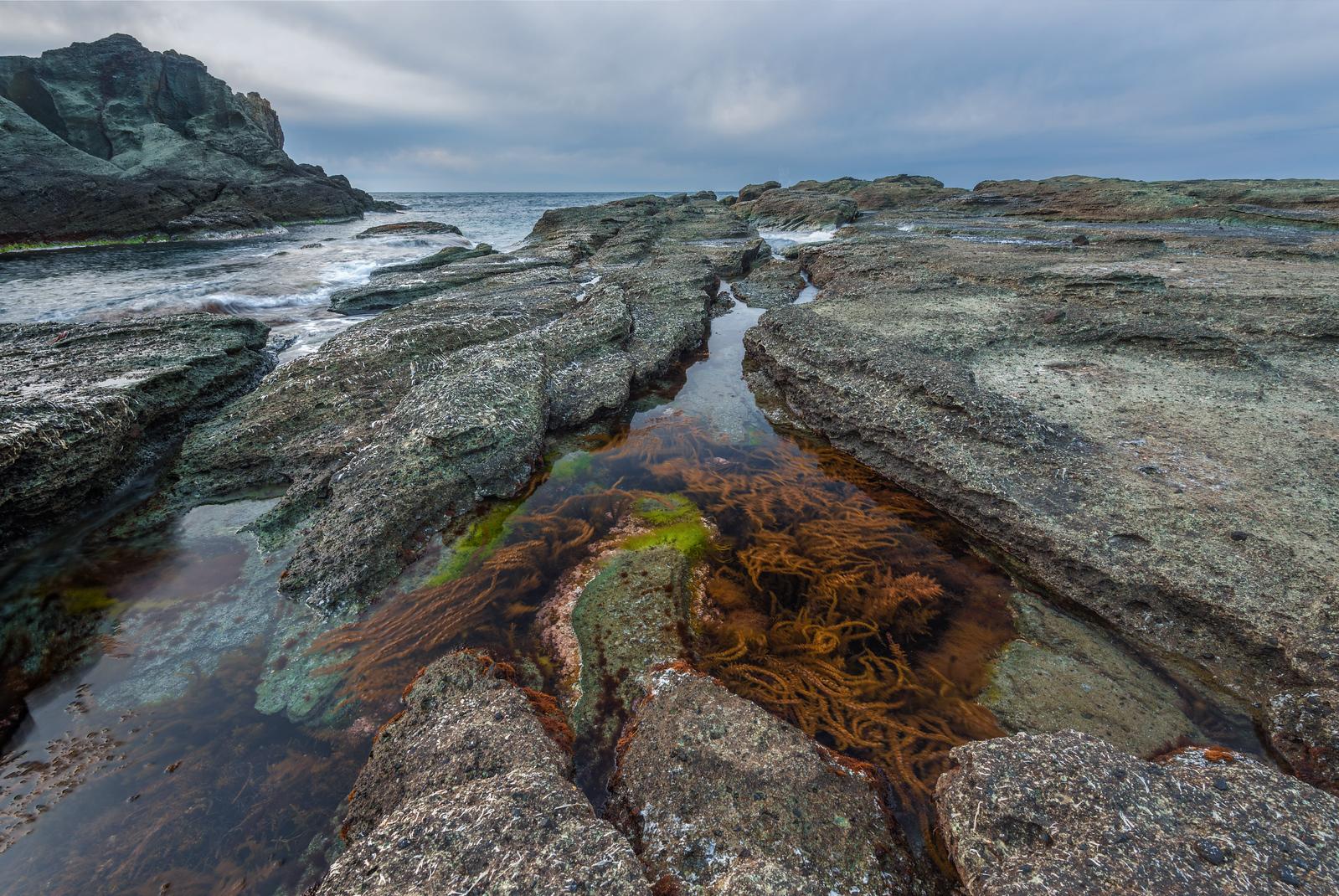 Seaweed and Rocks On The Senjojiki Coast_Landscape