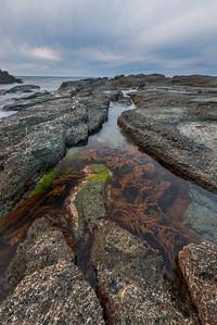 Seaweed and Rocks On The Senjojiki Coast_Portrait