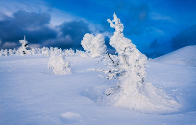 Snow Covered Trees In The Hakkoda Mountains