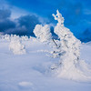 Snow Covered Trees In The Hakkoda Mountains