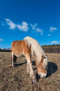 Kandachime Horse