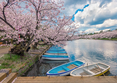 Boats and Blossoms at Hirosaki Castle Park