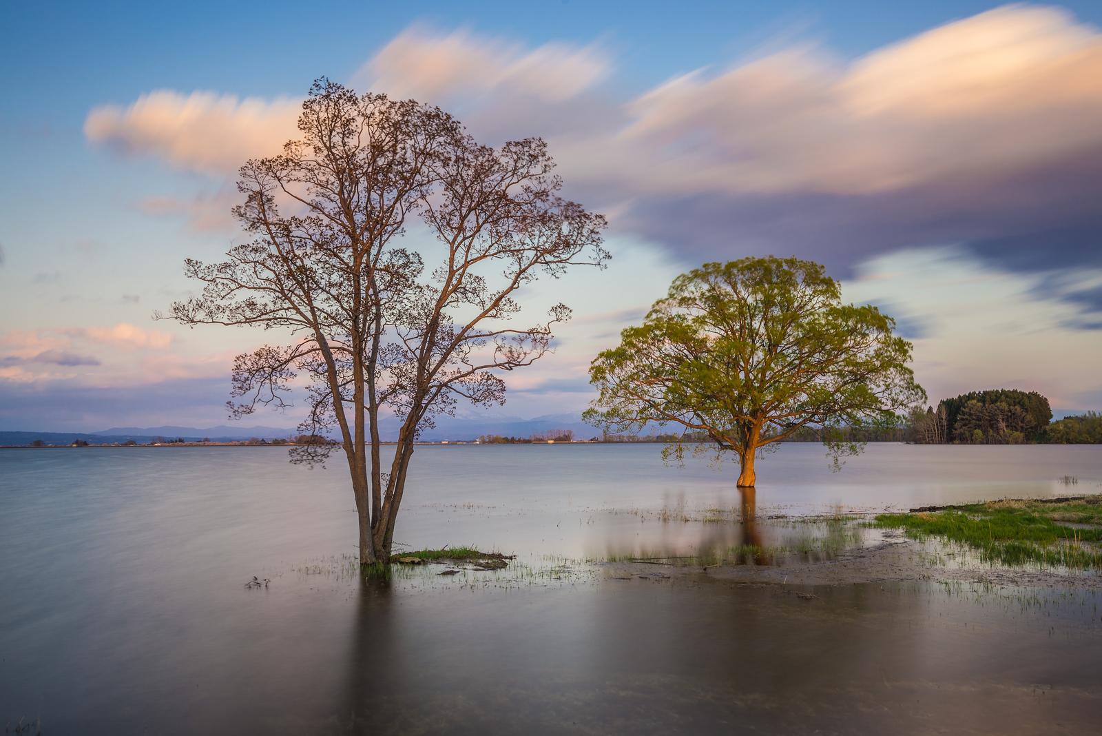 Trees In The Waters Of Tsugaru Fujimi Lake